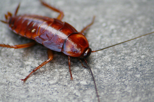 roach removal jacksonville